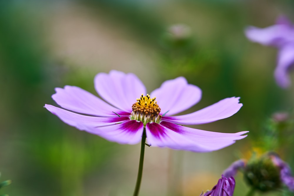 purple flower in bloom