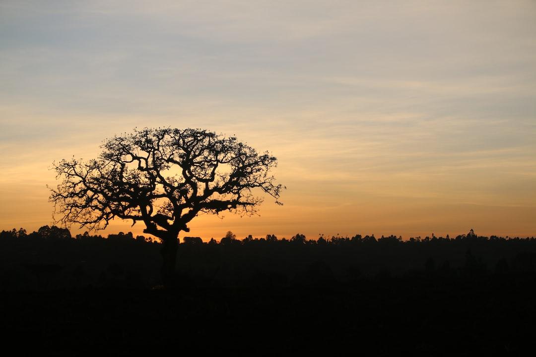 Sunrise in Nandi Kenya, East Africa. Taken just before sunrise.
