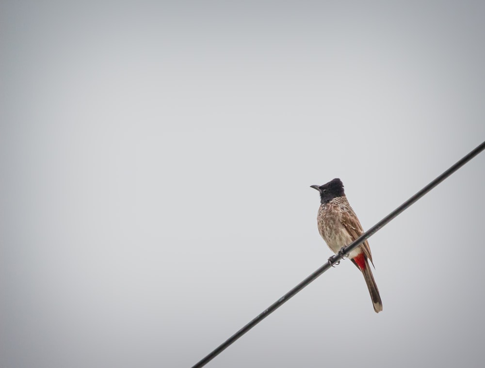 bird perched on cable