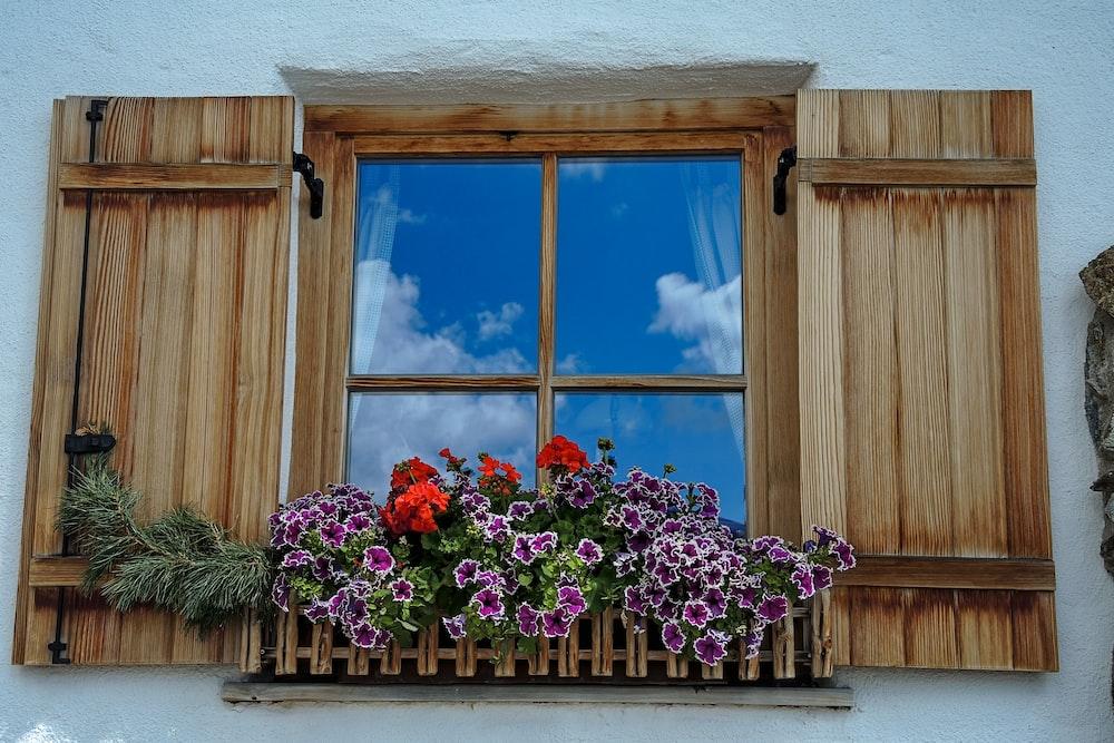 flowers in pot blooming beside window