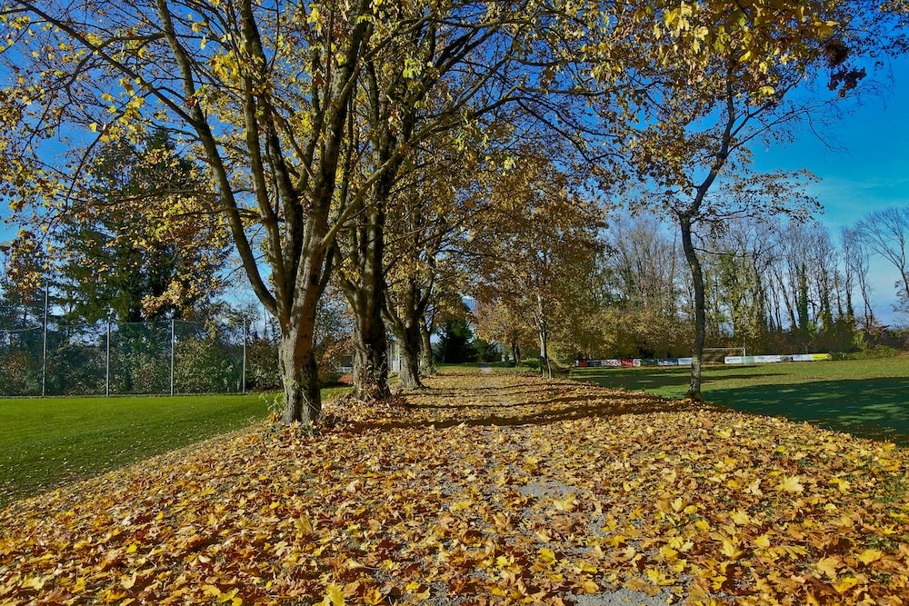 road covered with fallen leaves during daytime