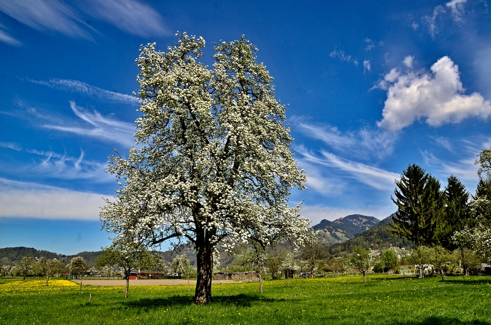 black and green tree under blue sky at daytime
