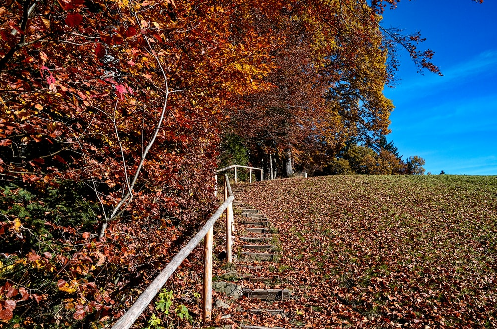 stairs covered with dried leaves under trees