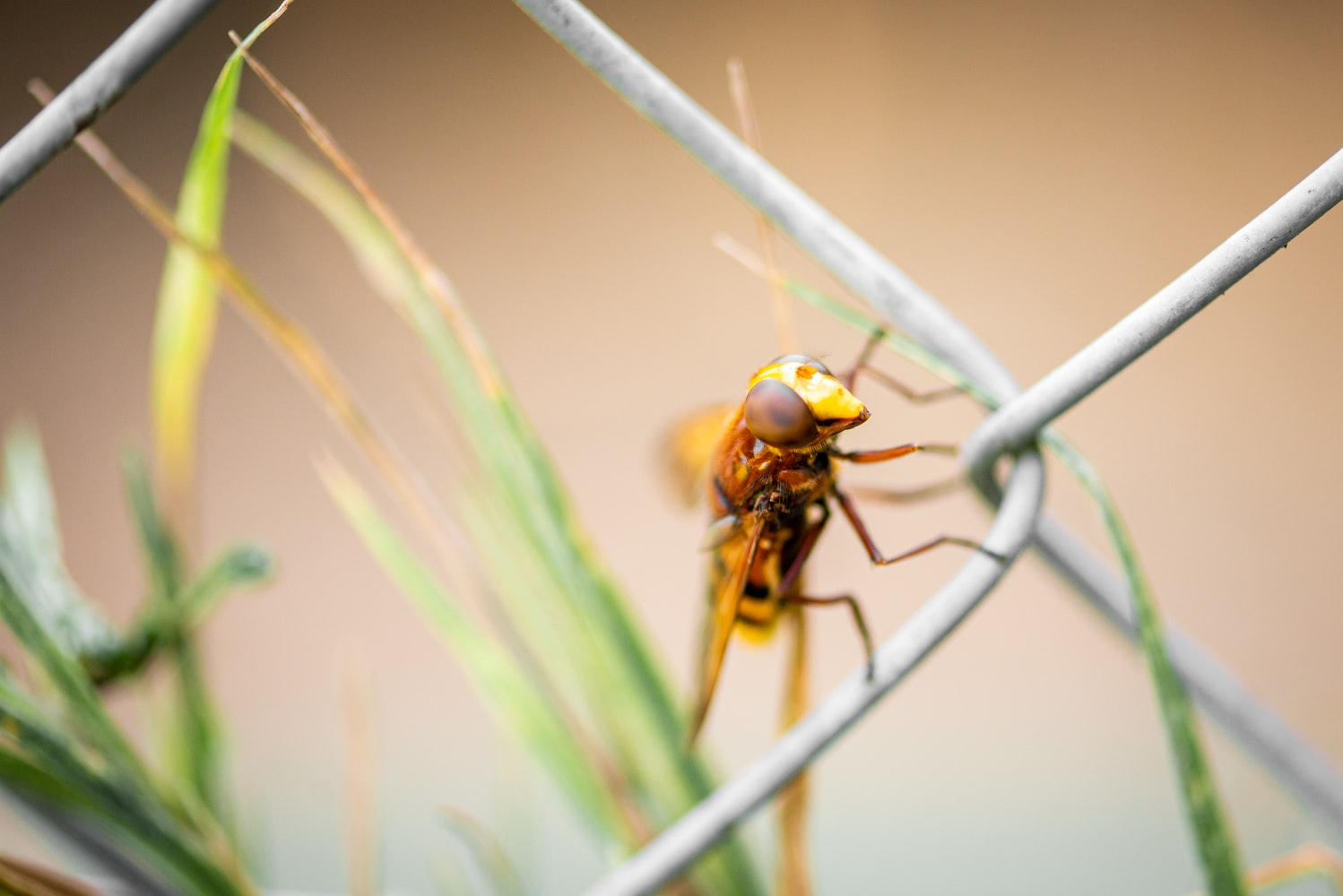 Wasp on a gate wire