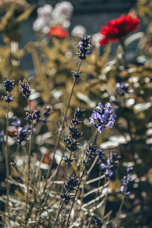 purple cluster flowers