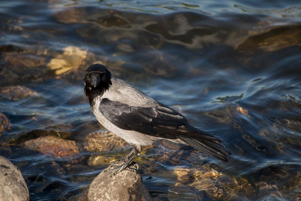 black and white bird