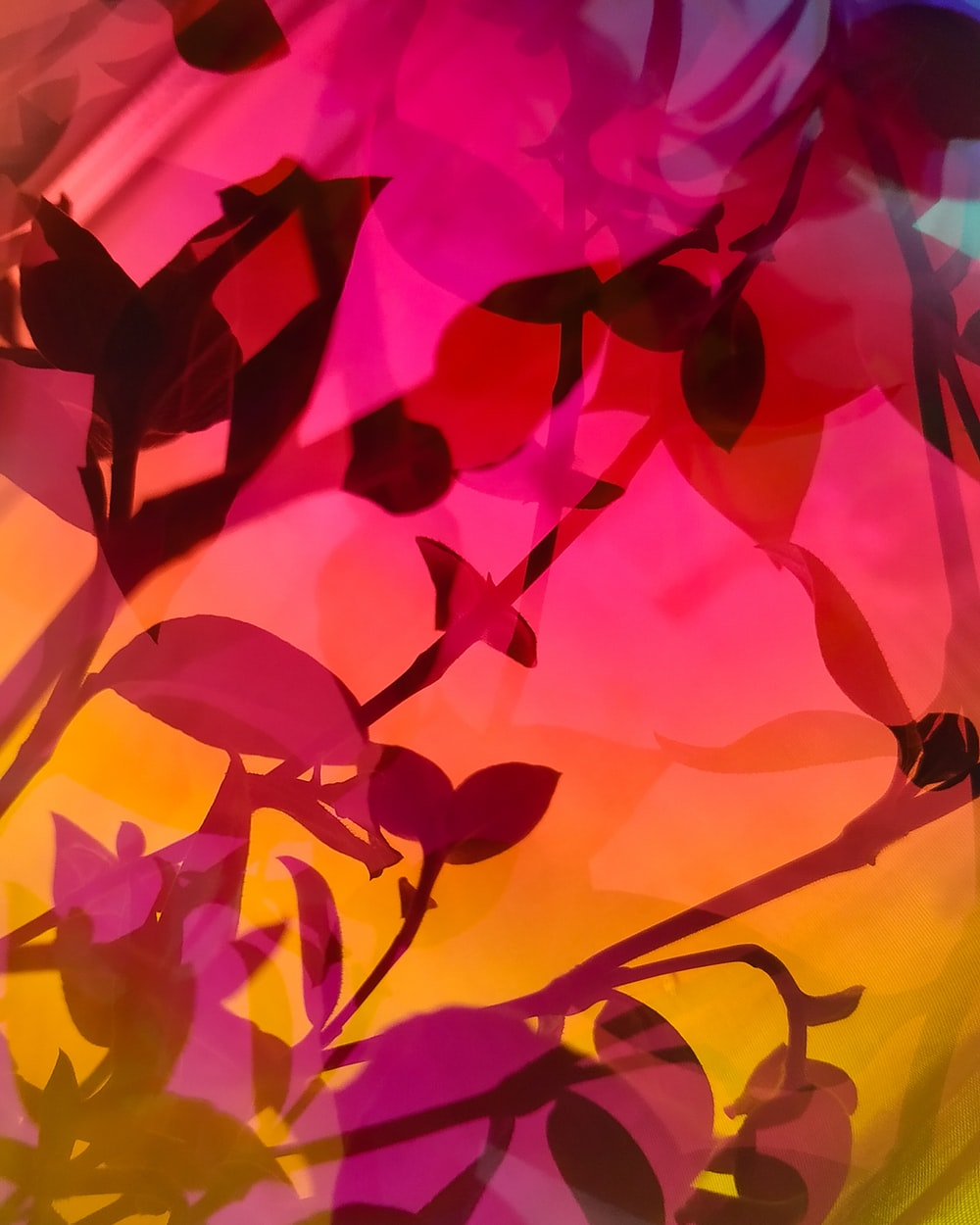 closeup photo of flowers