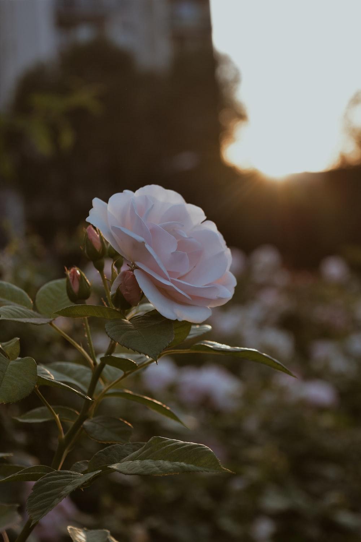 shallow focus photo of white flower
