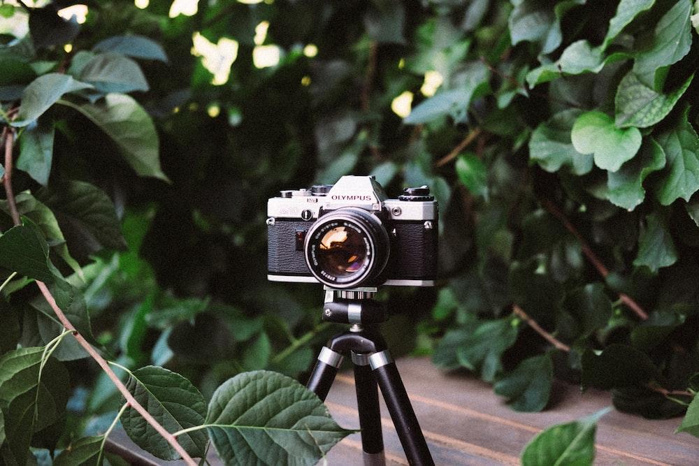 black and gray camera in tripod