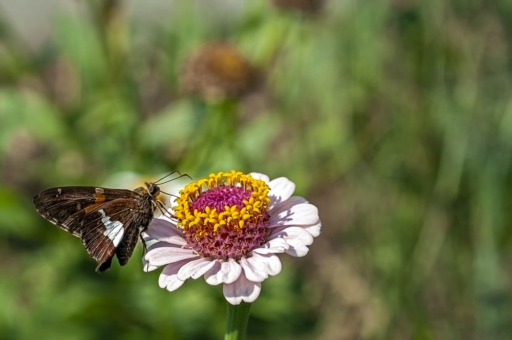 butterfly pearched on pink and yellow petaled flower
