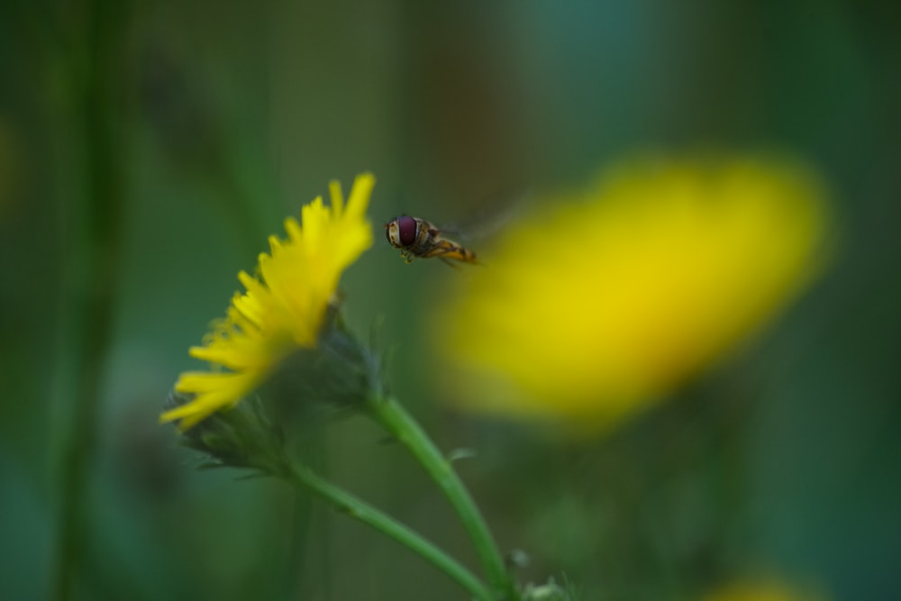 bee pearched on yellow petaled flower