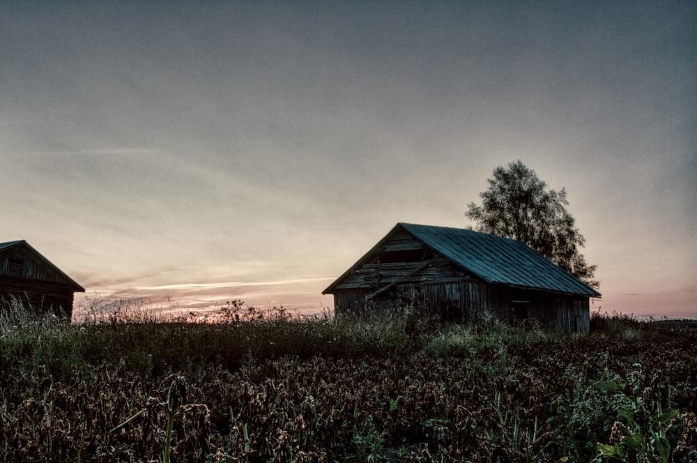 cabin near crop field