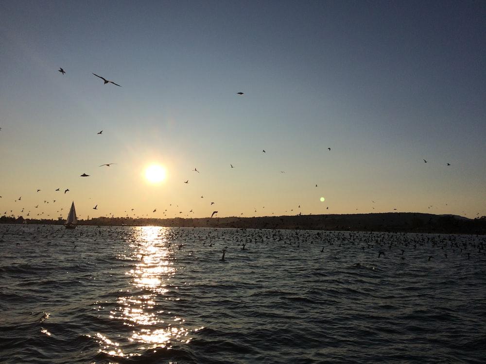 birds flying near sea during daytime