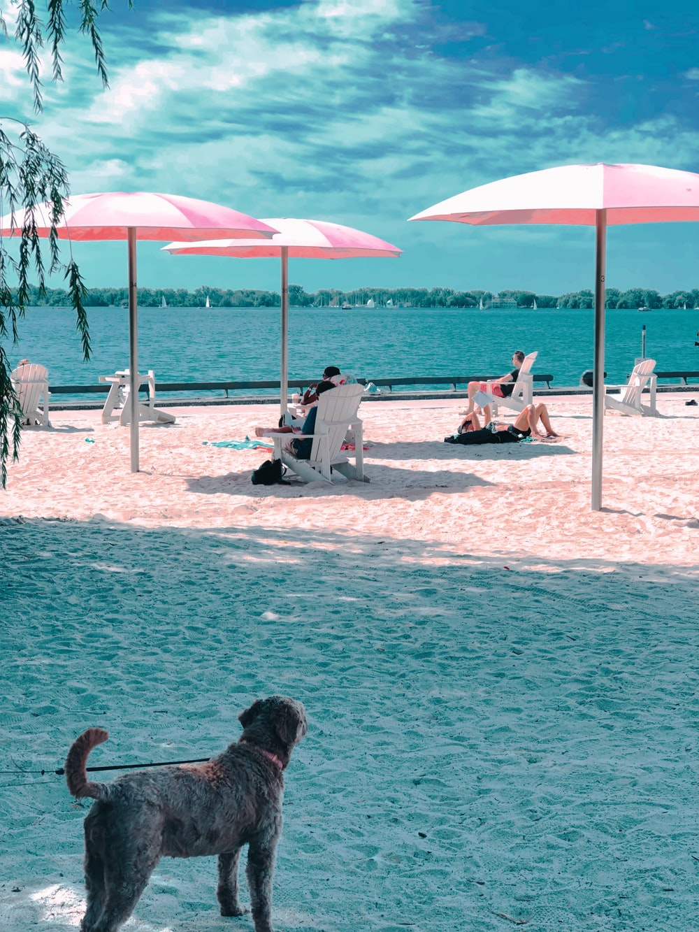 three pink patio umbrella