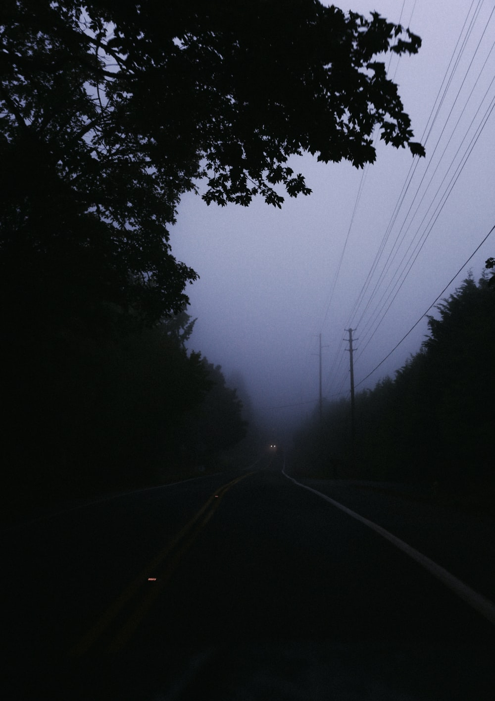 gray concrete road surrounded with tall and green trees covered with fogs