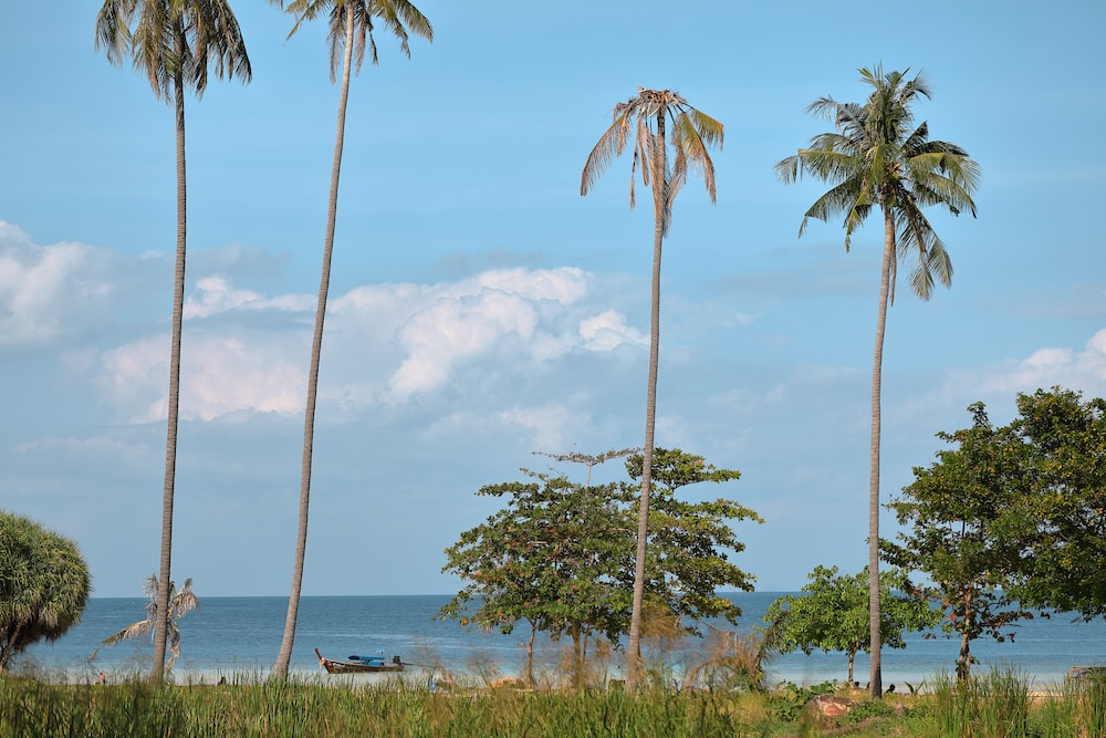 four green coconut trees