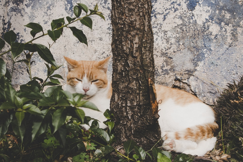 cat behind tree