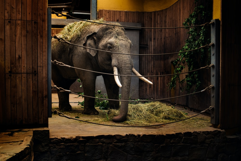 elephant calf in room with metal wires