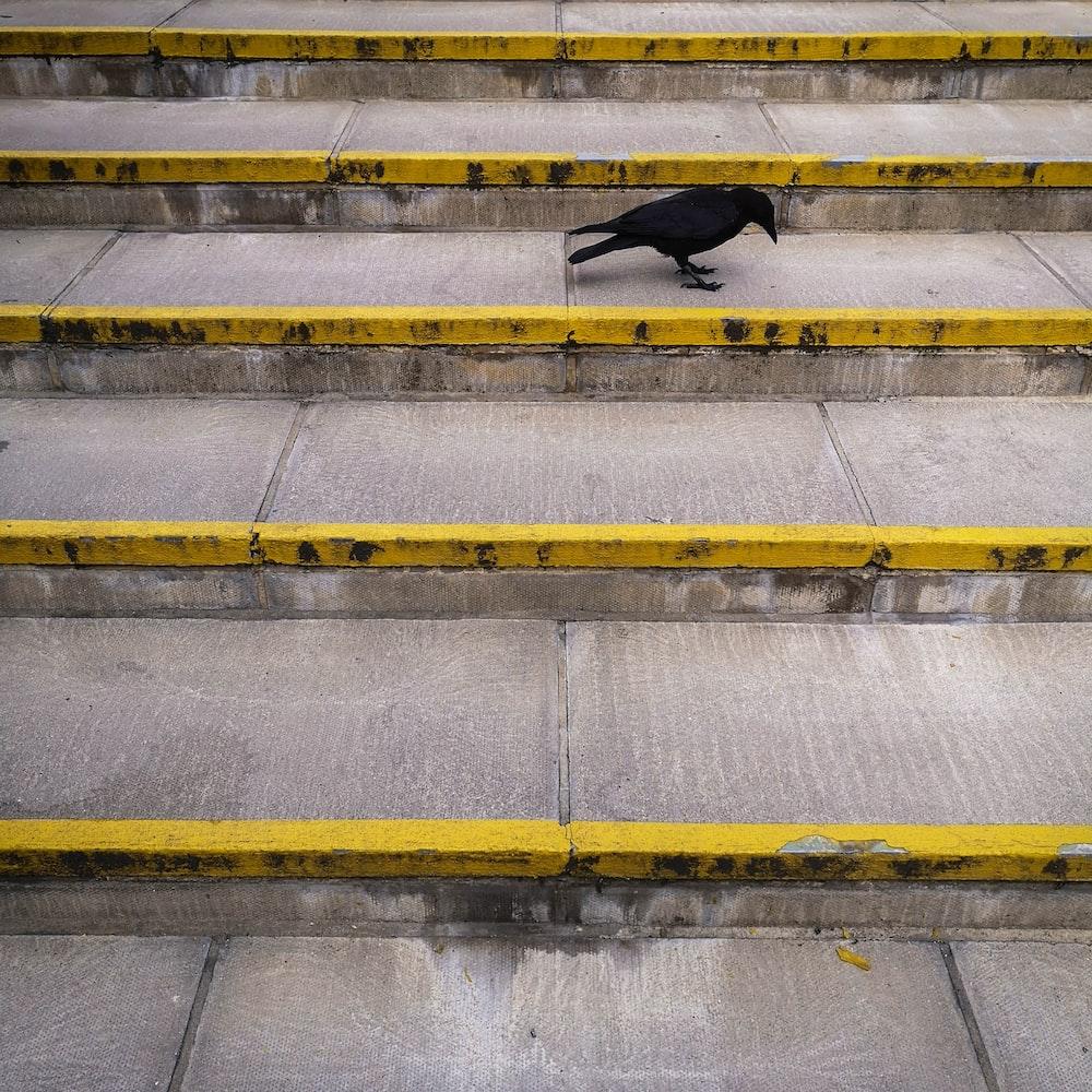 black crow on stairs