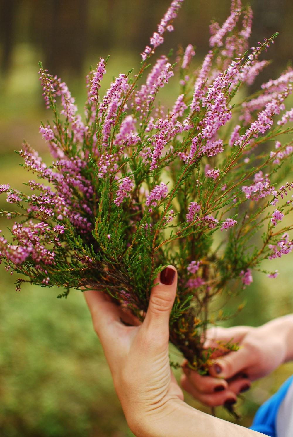 purple-leafed flowers