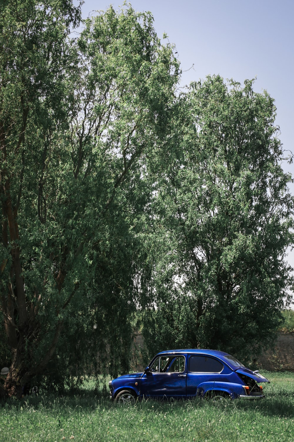 blue coupe near green-leafed trees