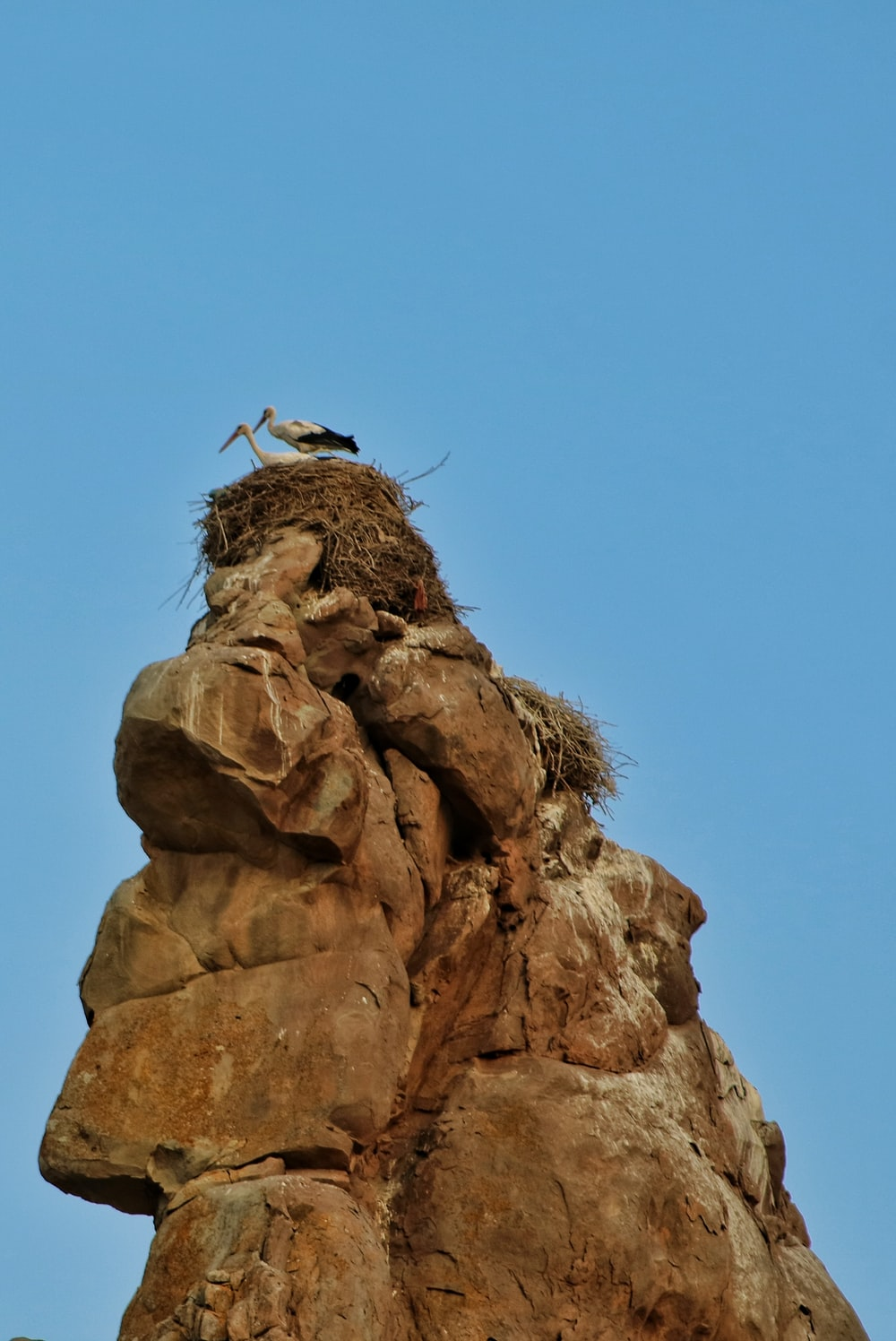 birds on rock with nest