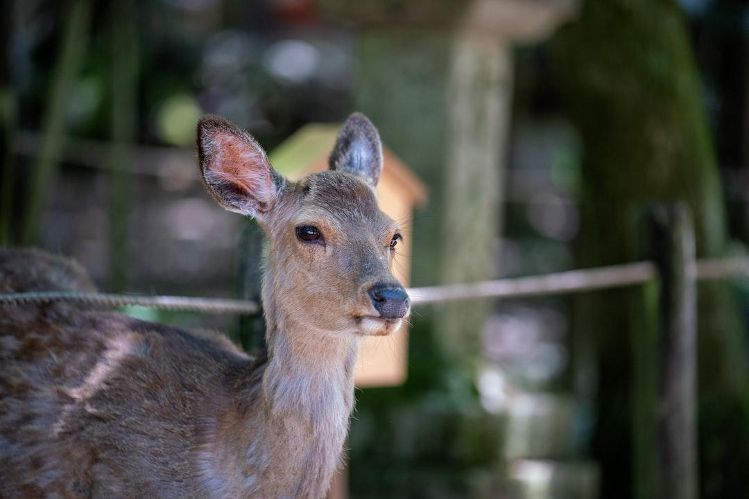 A deer outside a shrine