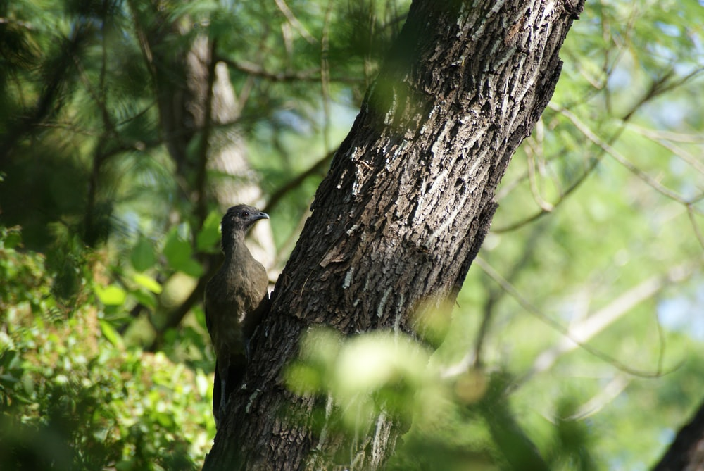 gray bird on tree