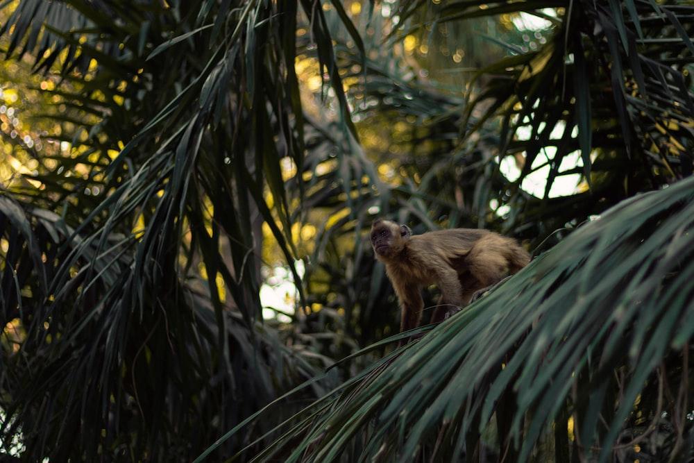 brown monkey on tree leaf
