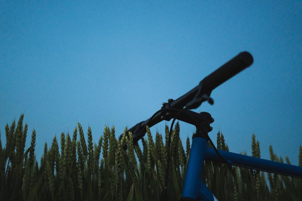 blue and black bike near green wheat field