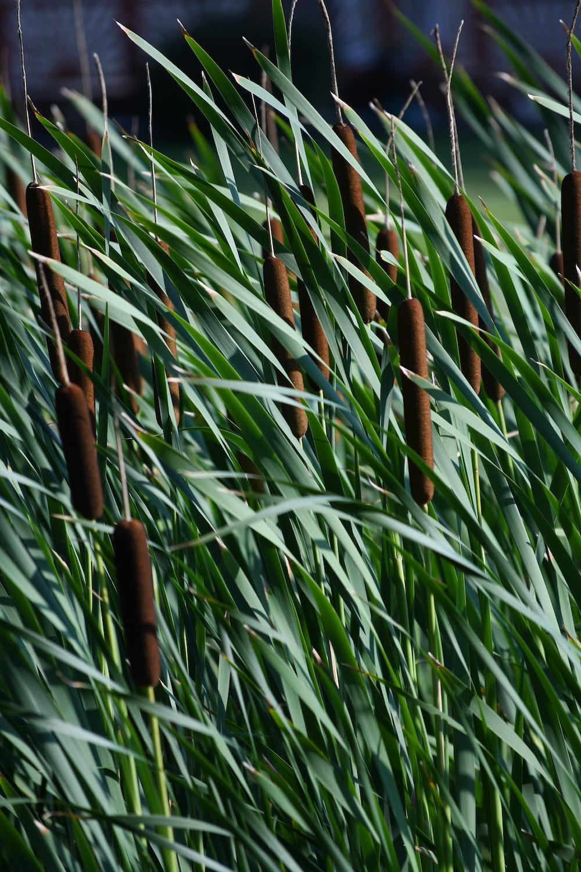 green linear leaf plants