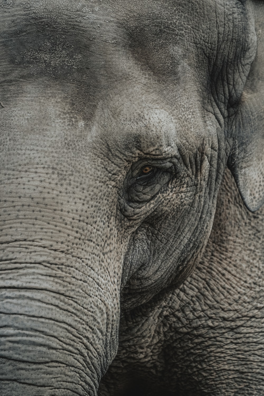 grey elephant close-up photography