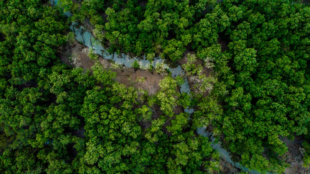 #aerial #drone #birdseye #topdown #forest #river #trees #woods #nature