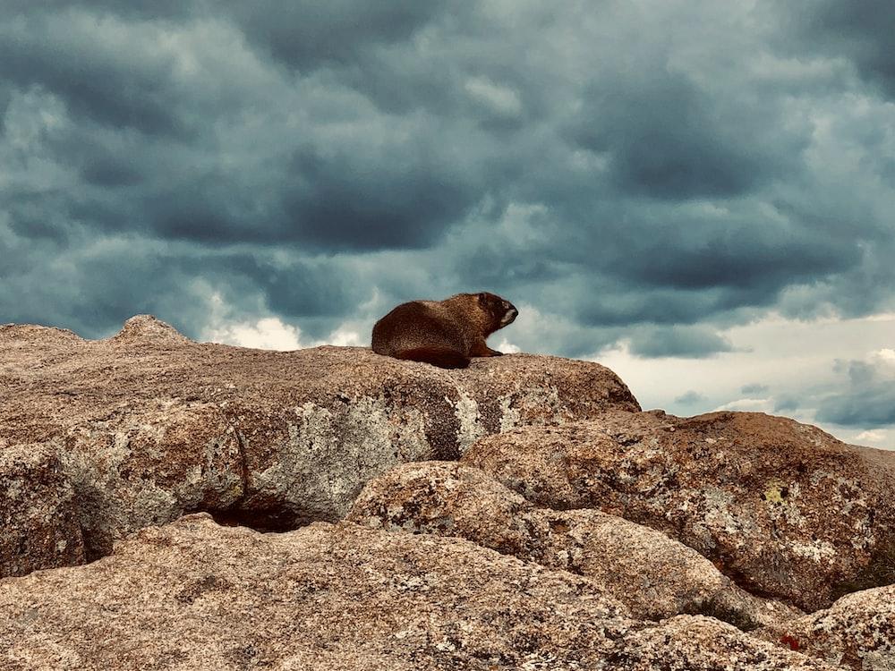 brown animal on rock