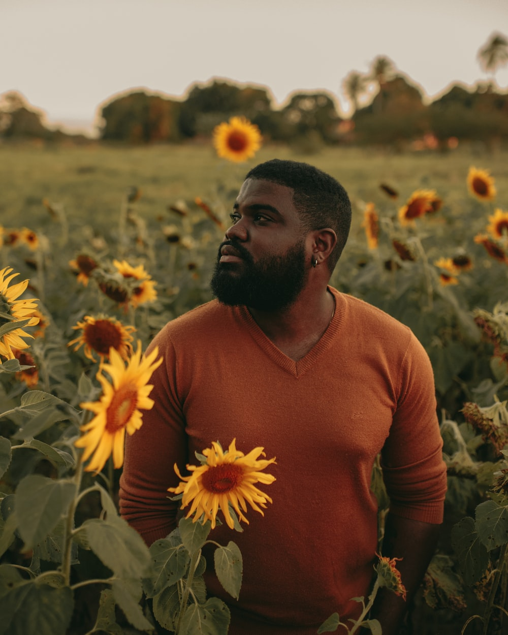 man in brown shirt standing on sunflower field