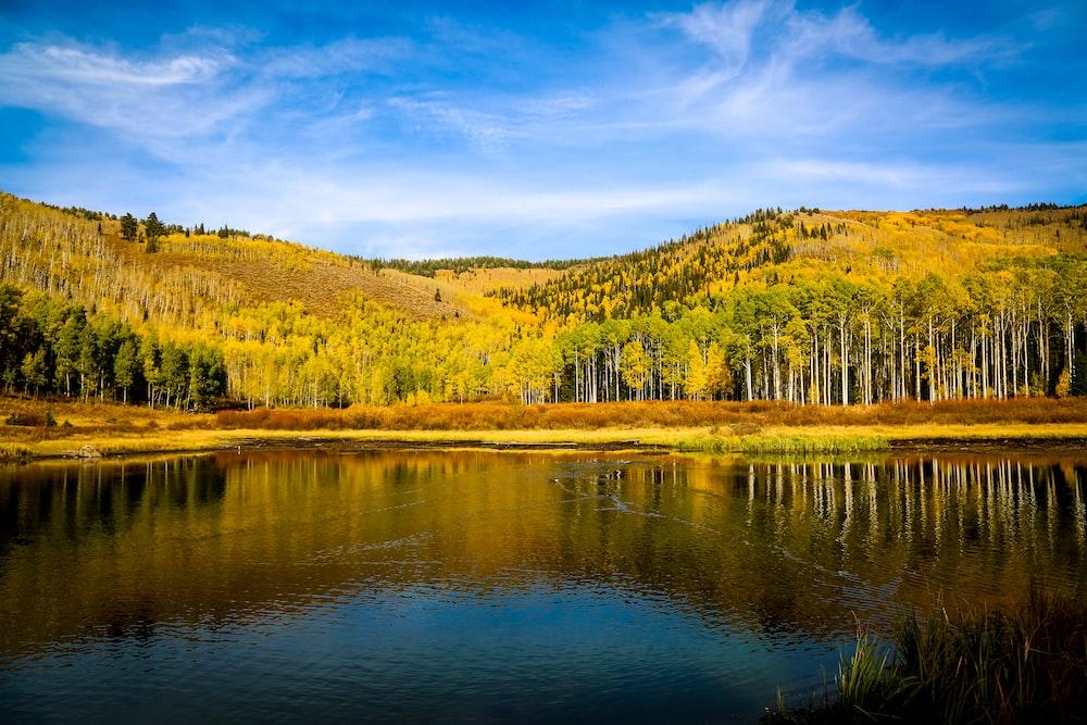 yellow and green trees across lake