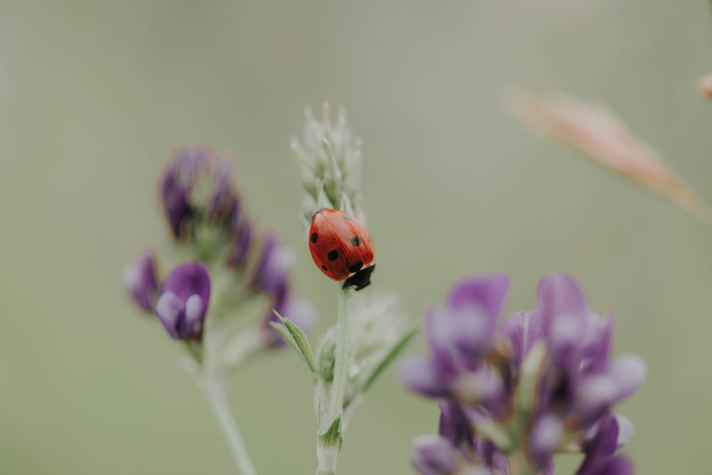 red ladybug in a plant close-up photography