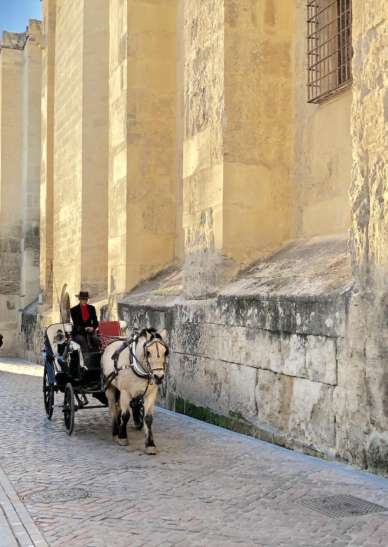 man riding black horse carriage on cobblestone street