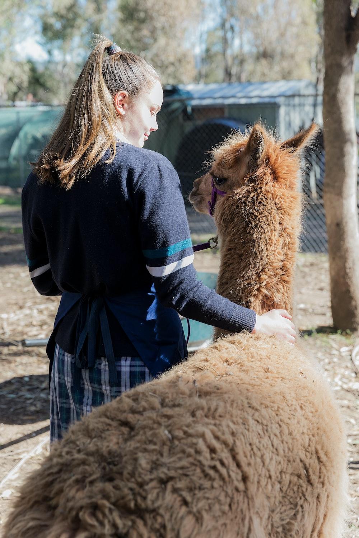 woman touching alpaca beside her