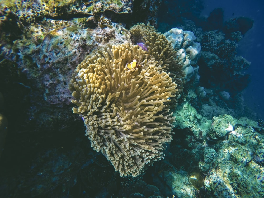 yellow and white corals close-up photography