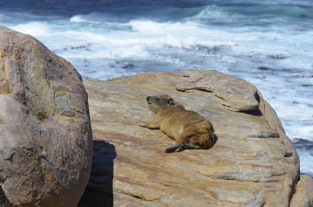 brown animal lying on stone