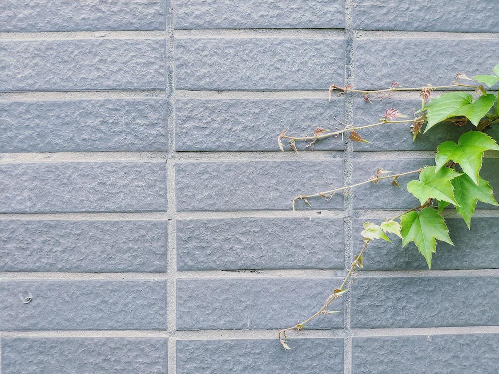 green vine plant