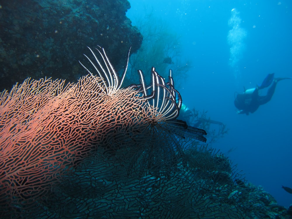brown sea creature
