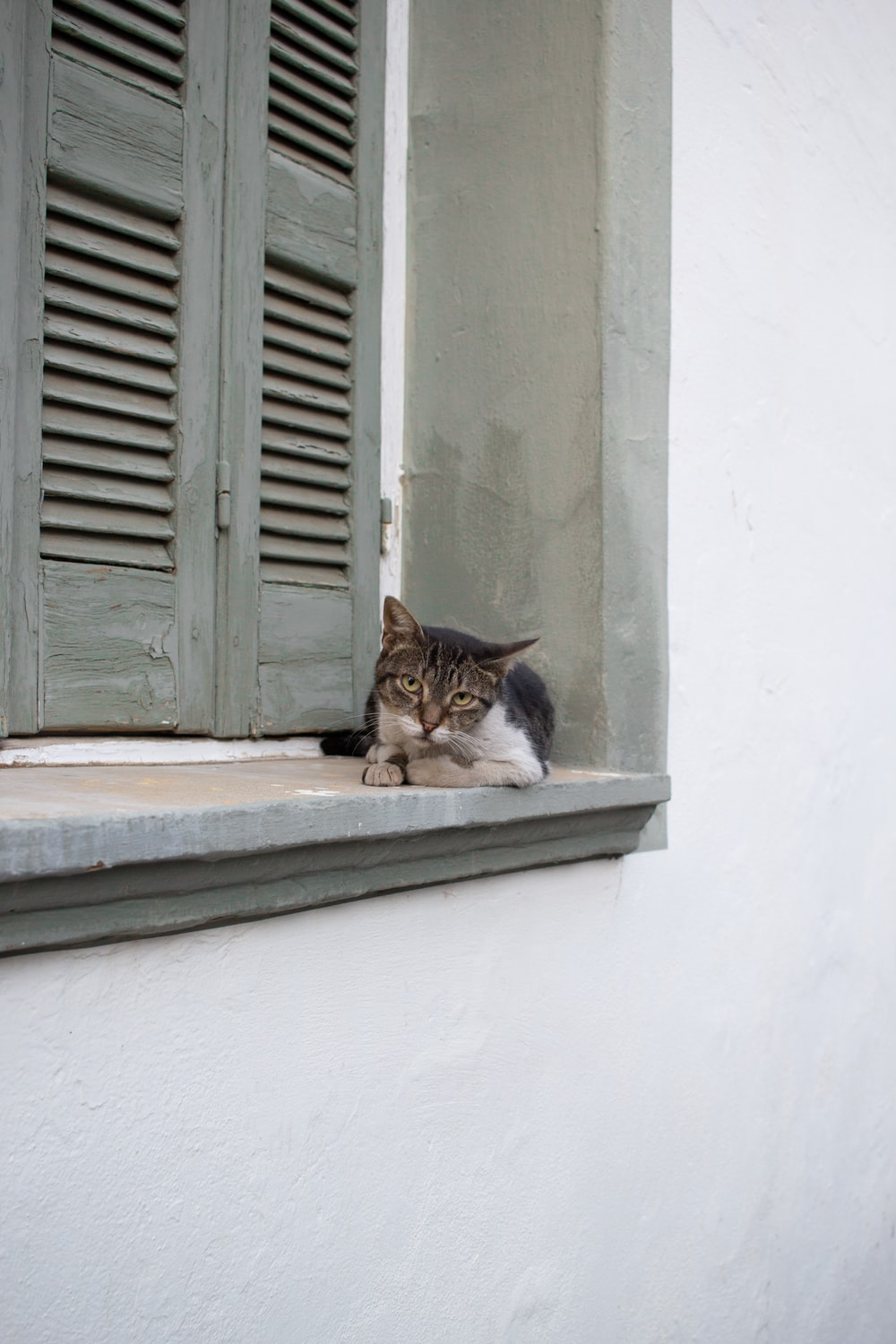 brown and white tabby cat besides gray window louver