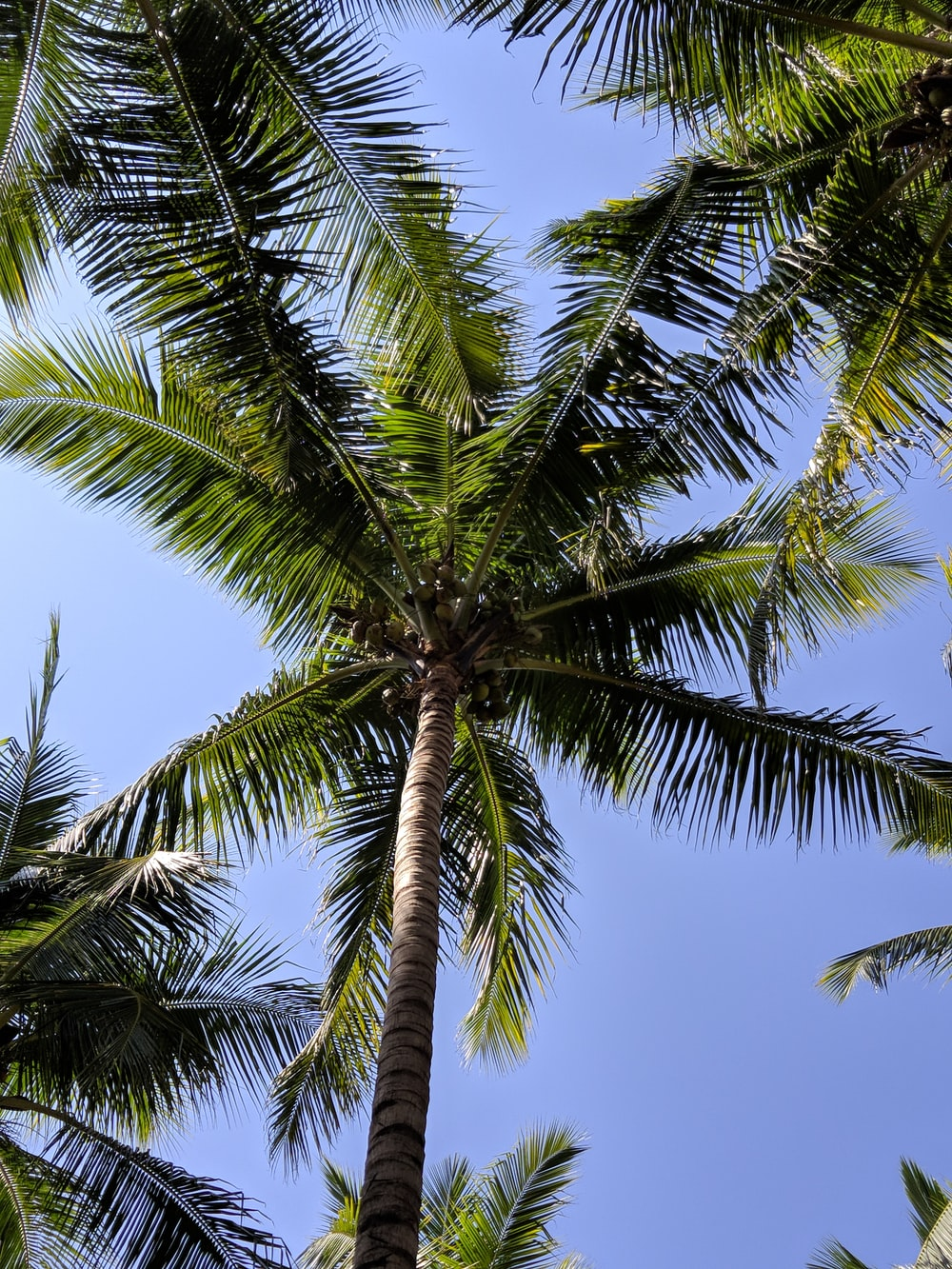 green and black coconut trees under blue sky at daytime