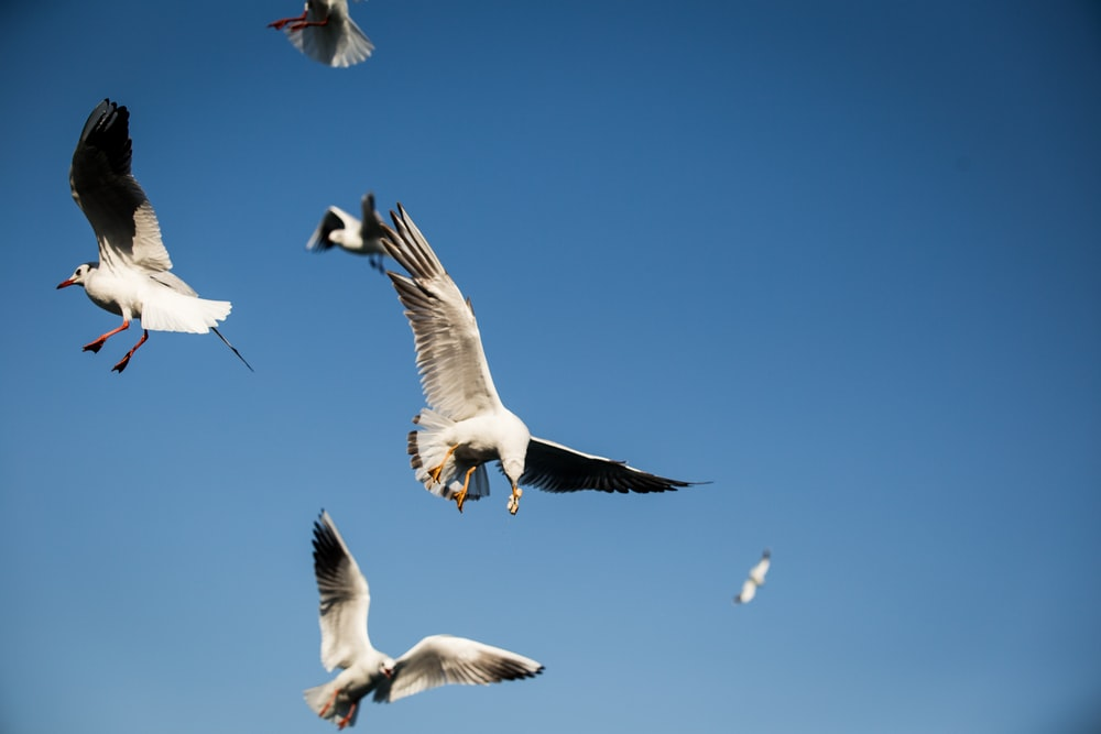 seagulls flying across blue sky photo