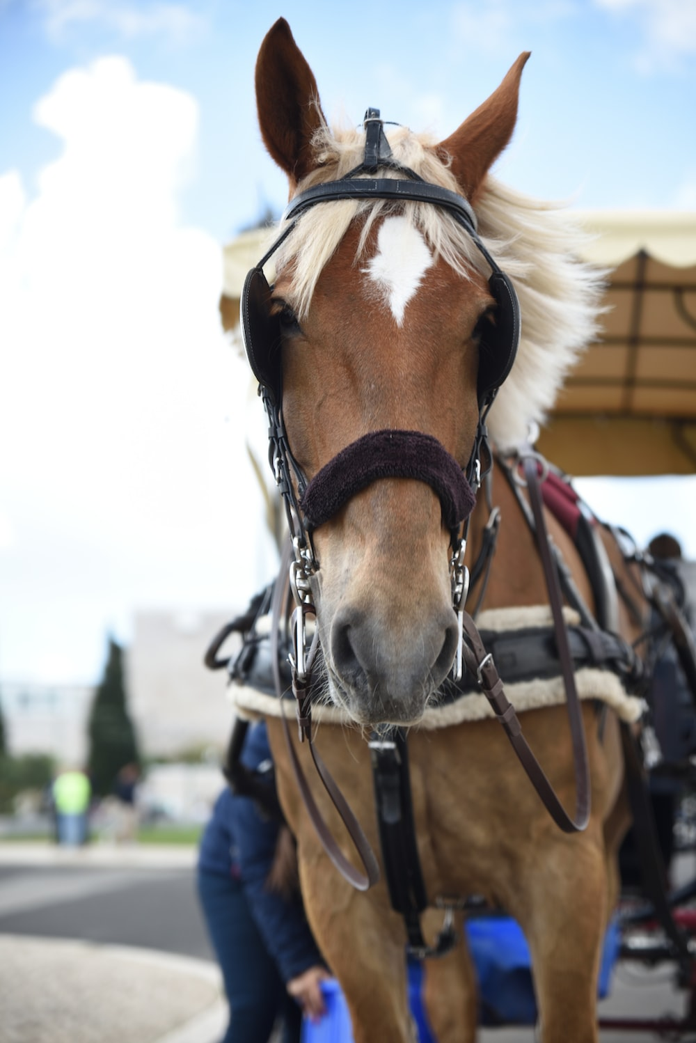 brown and white horse in close-up photography