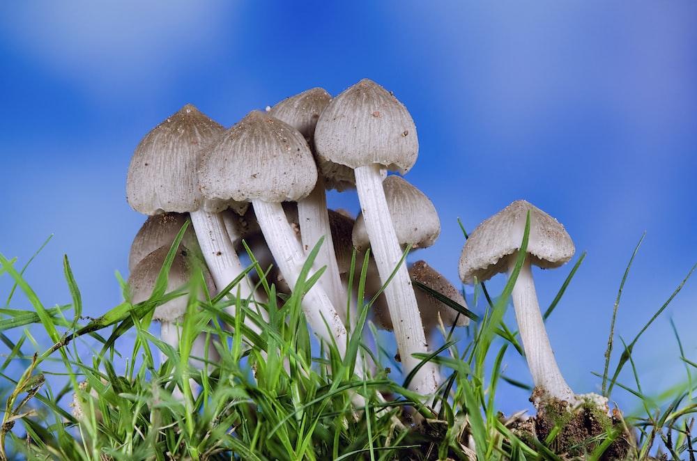 grey mushrooms