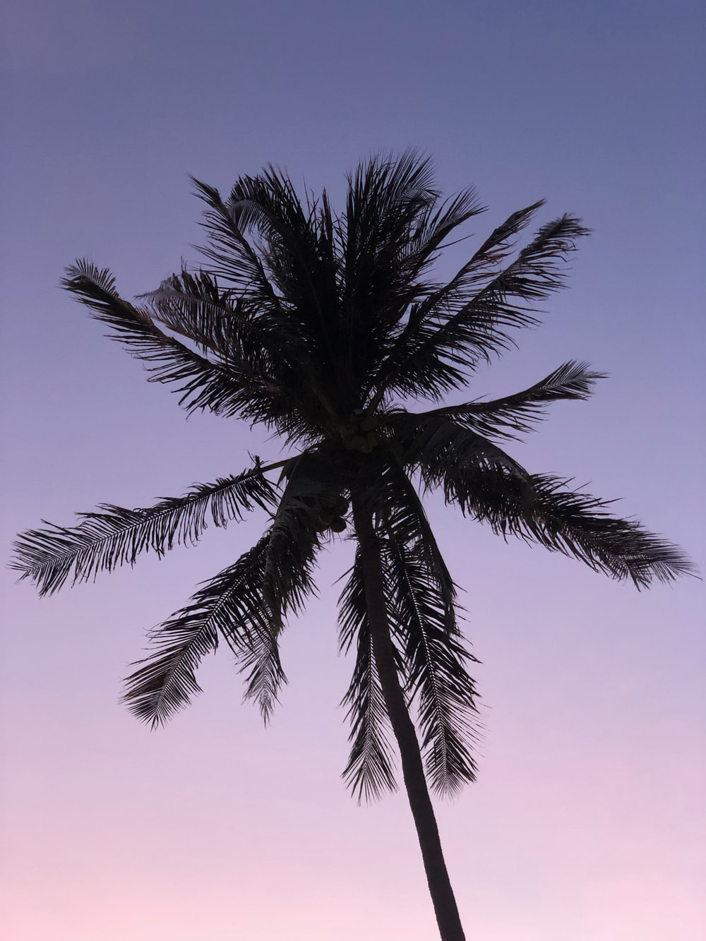coconut tree close-up photography