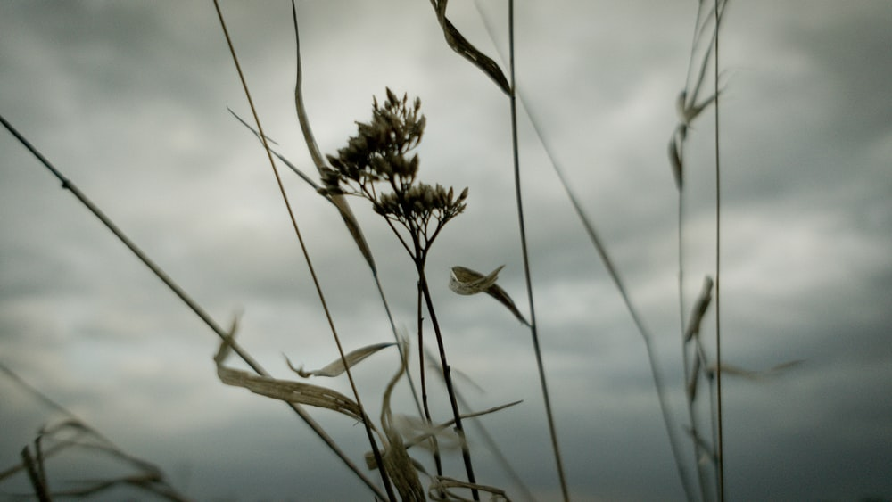 close up photography of grass